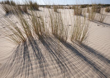 Mobile sand dunes, Doñana, Spain Royalty Free Stock Photos