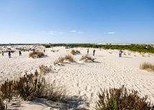 Mobile sand dunes, Doñana, Spain Royalty Free Stock Image