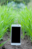 Mobile smart phone in green grass and ground Royalty Free Stock Photos