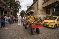 Mobile vendor pushing a cart full of bananas. September 26, 2017 Medellin, Colombia: a mobile vendor pushing a cart full of bananas in the center of the city Royalty Free Stock Photos
