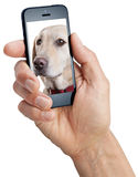 Mobilny telefonu komórkowego pies zdjęcia royalty free