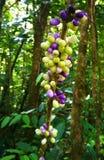 Mobiltelefonhintergrund Tropische merkwürdige Früchte lizenzfreie stockfotografie