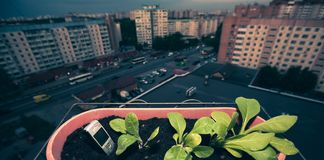 mobiltelefonpinnar ut ur de gr?na v?xterna f?r jordneard i en kruka av blommor p? balkongen royaltyfria bilder