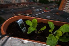 mobiltelefonpinnar ut ur jordningen i en kruka av blommor p? balkongen royaltyfri foto