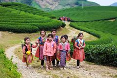 Moc Chau,越南- 2017年11月4日:山与开花的洋李,运载圆白菜flowe的Hmong小女孩的春天风景 免版税图库摄影