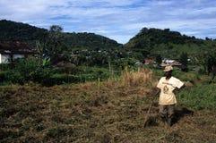 Moca - Equatoriaal Guinea Royalty-vrije Stock Fotografie