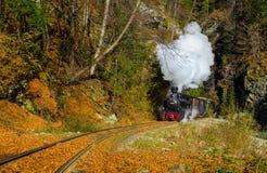 Mocanita kontrpary pociąg od Valea Vaserului blisko Viseu De Sus wioski, Maramures, Rumunia Zdjęcia Royalty Free