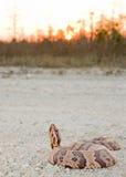 Mocassin solnedgång Fotografering för Bildbyråer