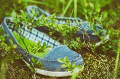 Mocassins na grama Fotografia de Stock