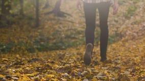 Mochila del hombre joven que camina en el bosque del otoño, el ser humano y la naturaleza, estación de oro almacen de metraje de vídeo