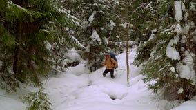 Mochileiro que caminha na floresta do inverno video estoque