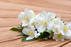 Mock orange Royalty Free Stock Photos