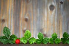 Mock strawberries Stock Image