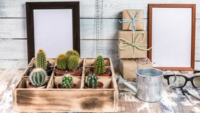 Mock Up Banner Collection of cacti in wooden box. Photo of various types of cacti. Image toning. Photo of various types of cacti. Mock Up Banner Collection of stock photos