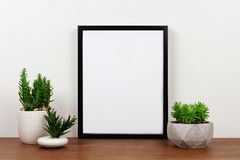 Mock up black frame against white wall with succulent plants on a wood shelf. Mock up black frame with succulent plants on a shelf or desk. Wood shelf and white stock images