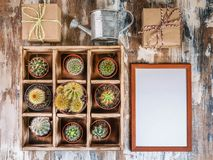 Mock Up Collection of cacti in wooden box. Photo of various types of cacti. Image toning. Top view. Photo of various types of cacti. Mock Up Collection of cacti stock photography