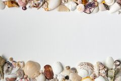 Summer borders from sea shells on white paper background with space for notes, quotes, message. Creative template frames