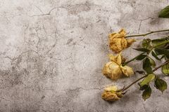 Mock up template with wilted flowers of white roses with a clean envelope, notepad and cup of coffee on a gray concrete background. View from above. Flat lay royalty free stock images