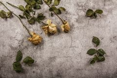 Mock up template with wilted flowers of white roses with a clean envelope, notepad and cup of coffee on a gray concrete background. View from above. Flat lay stock image