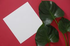 Mock-up white paper with space for text or picture on red background and tropical leaves royalty free stock photos
