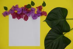 Mock-up white paper with space for text or picture on yellow background and tropical leaves and flowers stock image