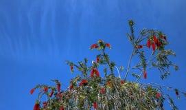 mockingbird Стоковое фото RF