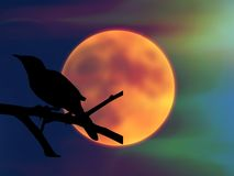 Mockingbird and the full moon Royalty Free Stock Photography