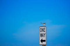 Mockingbird na jeden sposobu znaku Fotografia Stock