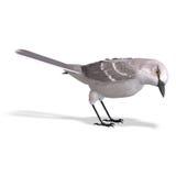 Mockingbird nordico. rappresentazione 3D con il residuo della potatura meccanica Fotografia Stock Libera da Diritti