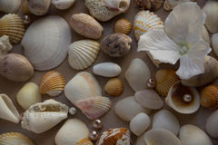 Mockup on the background of sea shells theme, holiday, letter, postcard Stock Photography