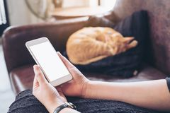 Mockup image of a woman`s hand holding white mobile phone with blank screen and a sleeping brown cat i. N background Royalty Free Stock Photography