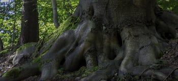 mocne drzewa Fotografia Royalty Free