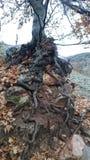mocne drzewa Zdjęcie Stock