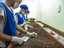 Coffee roaster production line of the Pessegueiro Farm in Mococa royalty free stock image