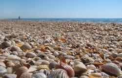 Moczę barwił seashells na plaży Zdjęcia Stock
