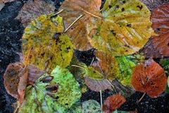 Moczę barwił spadać jesień liście Zdjęcie Royalty Free