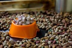 Moczę konserwował zwierzęcia domowego jedzenie w pucharze otaczającym suchym jedzeniem Obrazy Stock