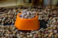 Moczę konserwował zwierzęcia domowego jedzenie w pucharze otaczającym suchym jedzeniem Zdjęcia Royalty Free