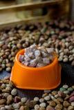 Moczę konserwował zwierzęcia domowego jedzenie w pucharze otaczającym suchym jedzeniem Zdjęcia Stock