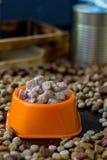 Moczę konserwował zwierzęcia domowego jedzenie w pucharze otaczającym suchym jedzeniem Obraz Royalty Free