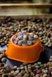 Moczę konserwował zwierzęcia domowego jedzenie w pucharze otaczającym suchym jedzeniem Zdjęcie Stock