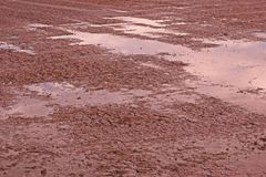 Moczę siał ryżu glebowego warunek, nasycająca ziemia Zdjęcia Stock