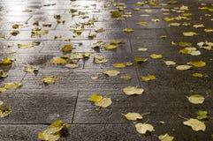 Moczę taflował ziemię przy jesieni nocą Tło Fotografia Royalty Free