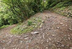 Moczę wyginał się lasową kamienistą drogę Zdjęcia Royalty Free