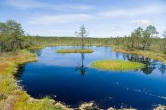 Moczar jezioro, mała wyspa i sosna, Fotografia Royalty Free