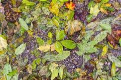 Moczy liść teksturę Tło, natura Zdjęcie Stock