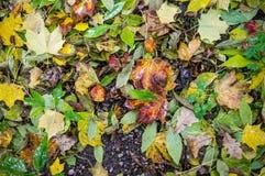 Moczy liść teksturę winieta, tło, natura Zdjęcia Royalty Free