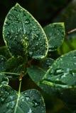 Moczy liście krzak fotografia stock