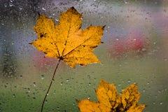 Moczy liście na okno Zdjęcie Royalty Free