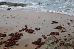 MOCZY plażę Z CZERWONĄ gałęzatką Obraz Royalty Free